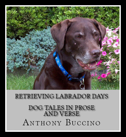 Retrieving Labrador Days dog tales in prose and verse